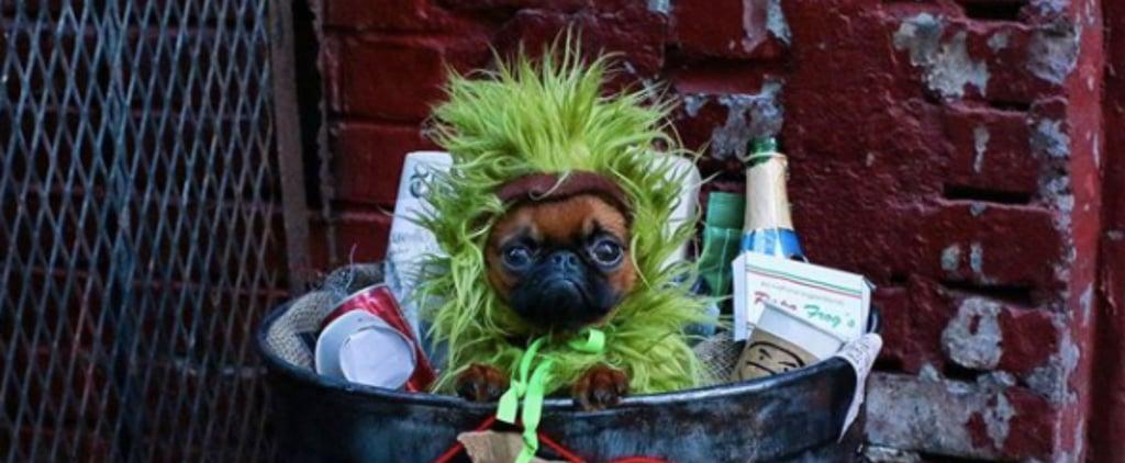Dog's Adorable Oscar the Grouch Halloween Costume | Photo