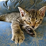 You're getting very sleepy . . . Source: Flickr user BruceTurner