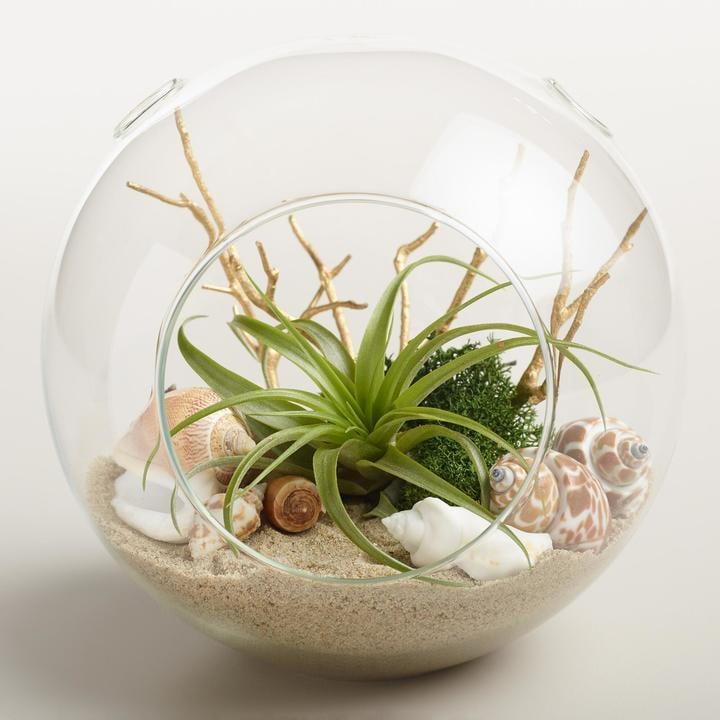 Beach Garden Live Plant Glass Terrarium