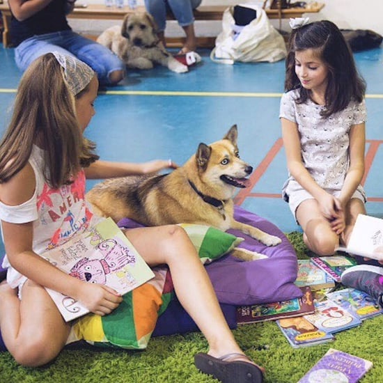 Therapy Dogs in Dubai