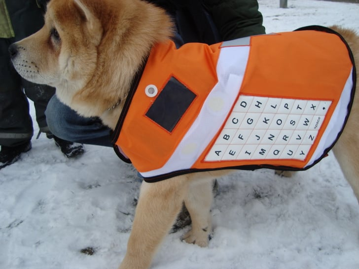Messenger Dogs For Disasters