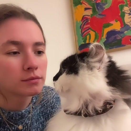 Kiss Your Pet on the Head Challenge   TikTok Videos