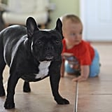 Dog Owners Who Think Their Dog Is Equal to Your Child