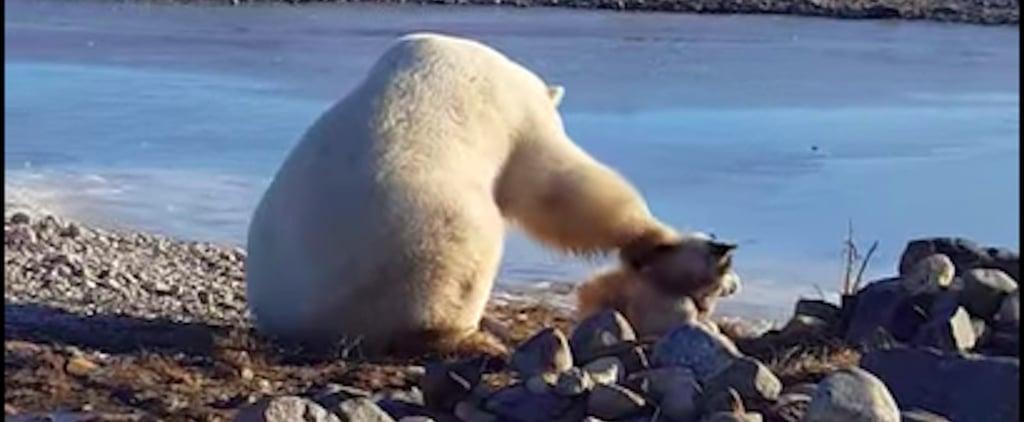 Polar Bear Petting Dog Video