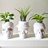 Why settle for just one skull when you can get this set of three ($42)?