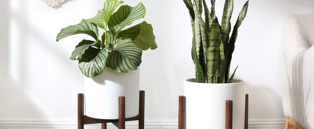 Best Plant Stand From Amazon
