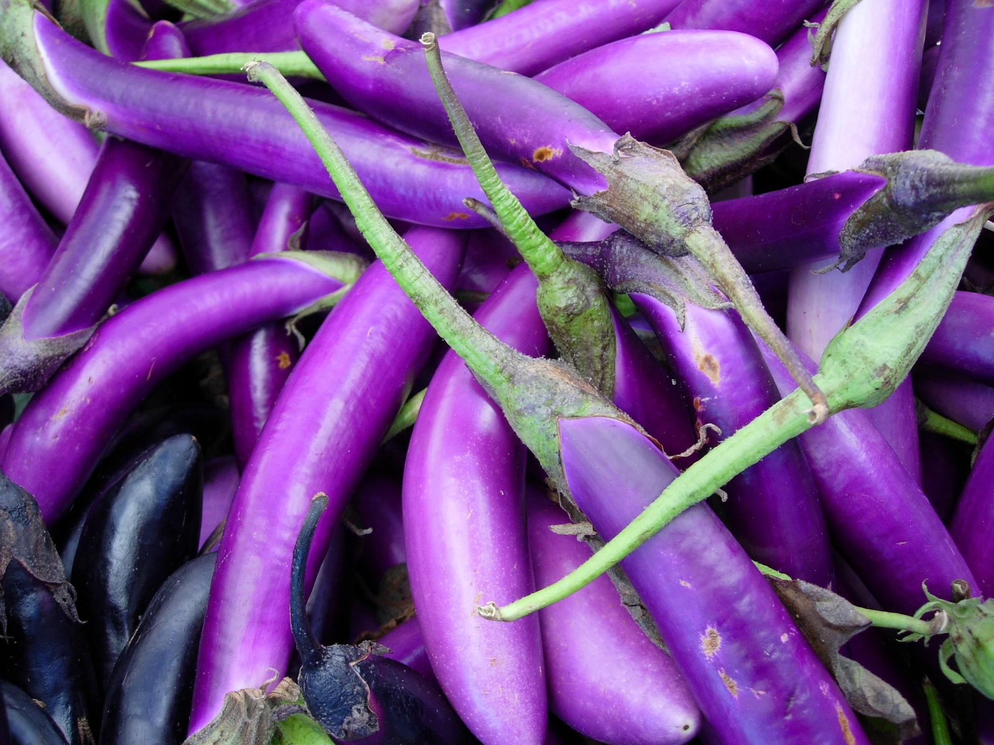 What to Buy: Japanese Eggplants