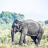 Elephant Close-Ups