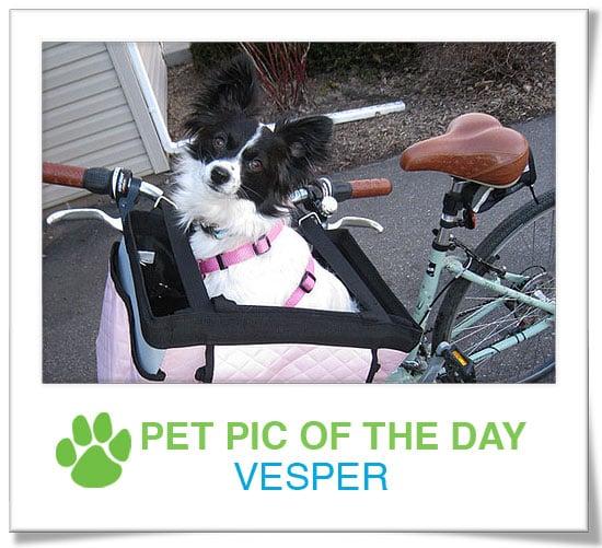 Pet Pics on PetSugar 2009-03-25 09:30:31