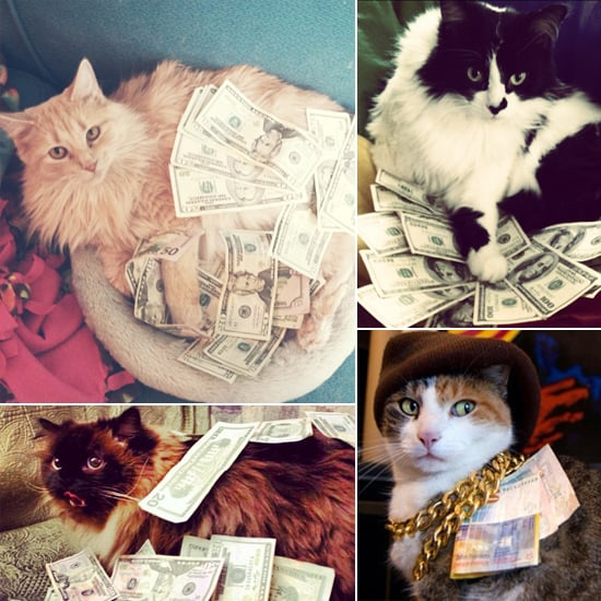 Look at Them Meow: 15 Cats Rolling in Piles of Cash