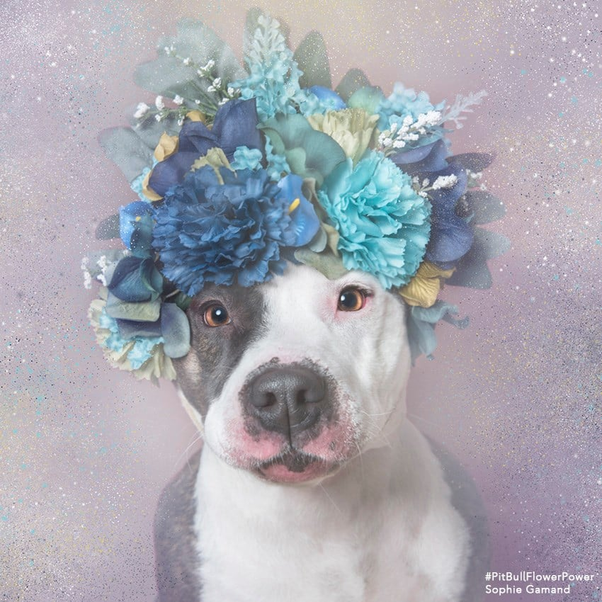 How To Make Dog Flower Crowns