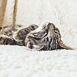 Upside-down nap time.