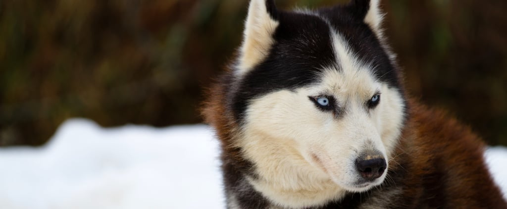 Peter Dinklage Asks GOT Fans to Stop Buying Huskies For the Novelty