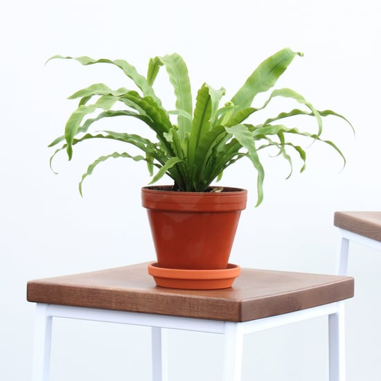 Can I Order Plants Online?