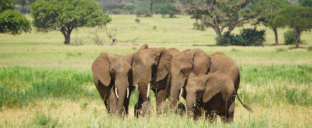 How to Have an Unforgettable Safari Vacation on a Budget