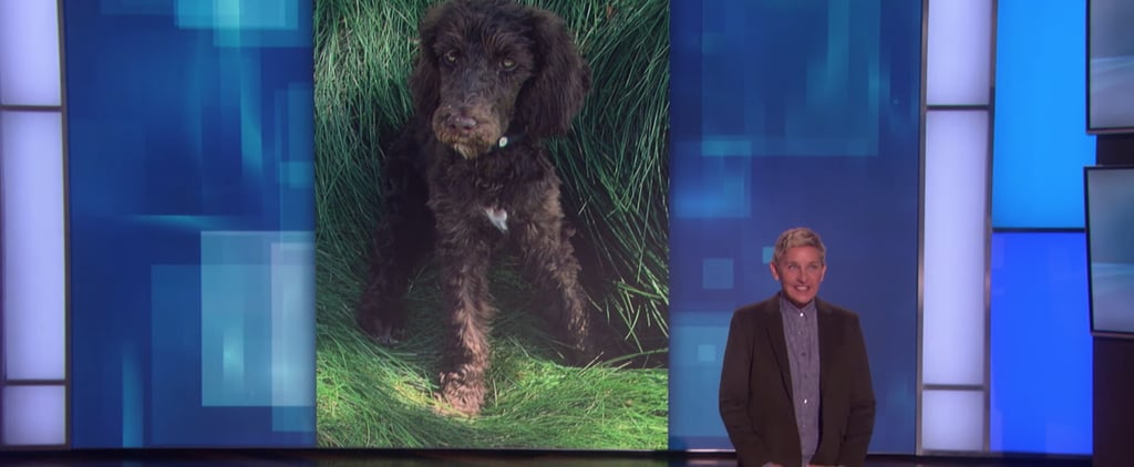 Ellen DeGeneres Gets Poodle Puppy Named Mrs. Wallis Browning