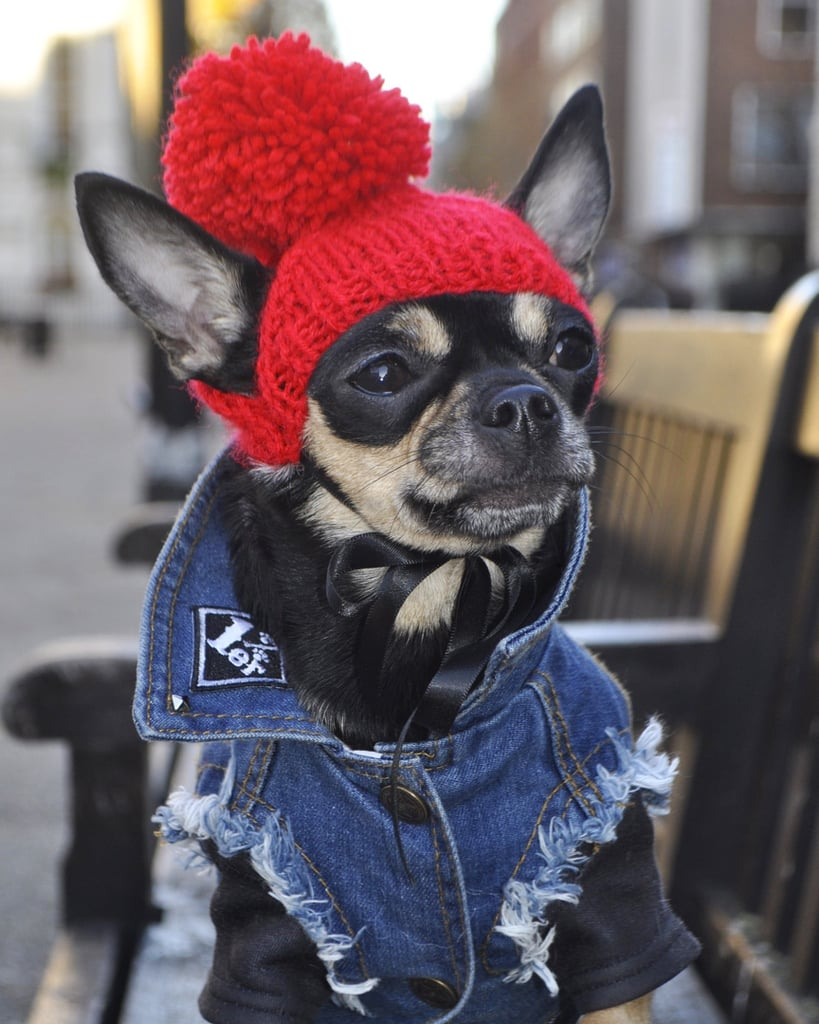 Pethaus Denim Dog Vest