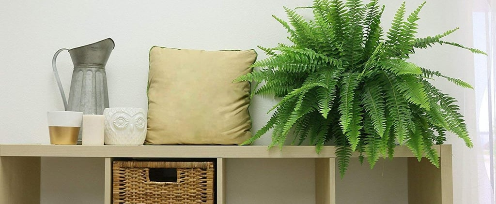 Indoor Plants For Air Quality on Amazon