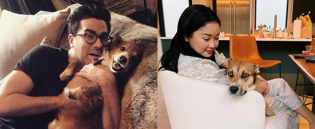 Which Celebrity Pet Are You By Zodiac Sign