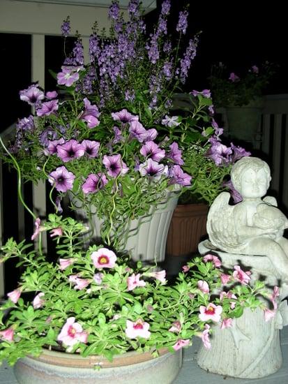 container gardens on backyard deck
