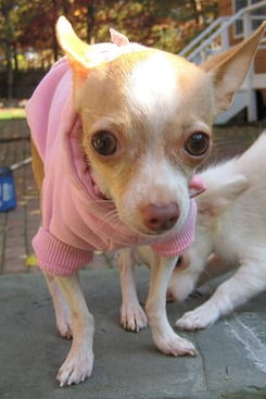 Pet Pic of the Day: Pretty in Pink