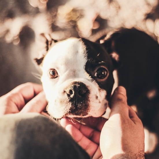 Best Pet Names For Girlfriend: POPSUGAR Pets