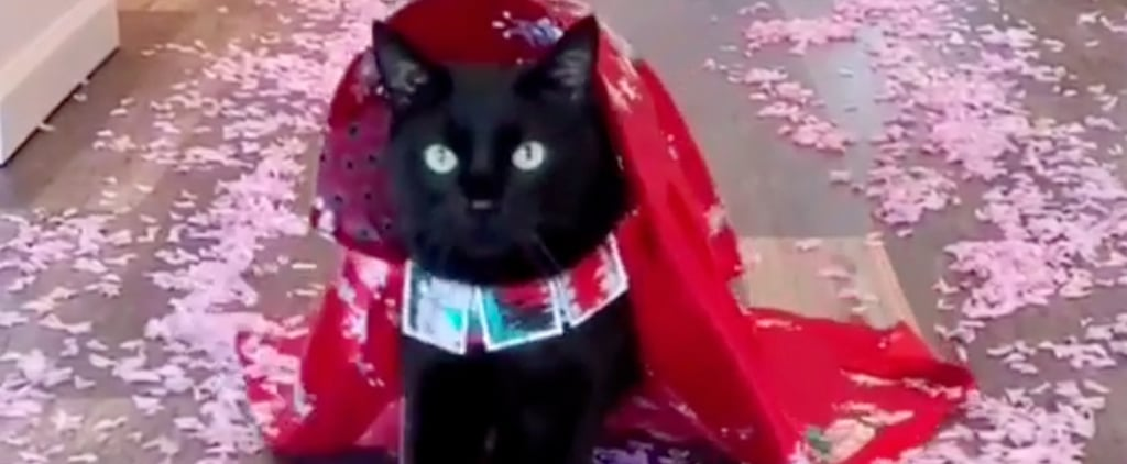 Stylish Cat Models Handmade Outfits | Instagram Videos