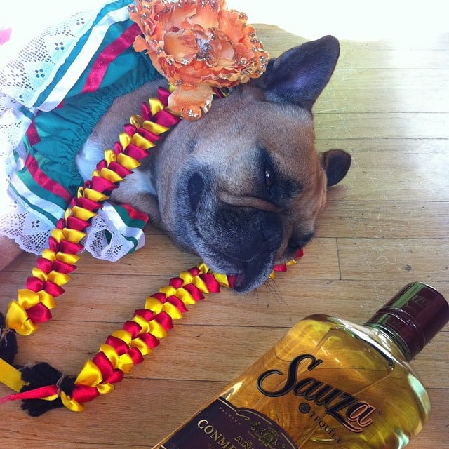 Too Much Tequila