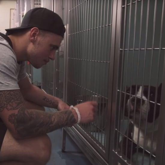 Gus Kenworthy Dog Adoption Video