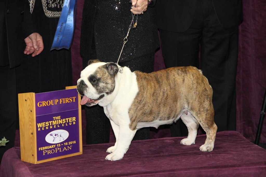 Westminster Dog Show Herding Group Winner