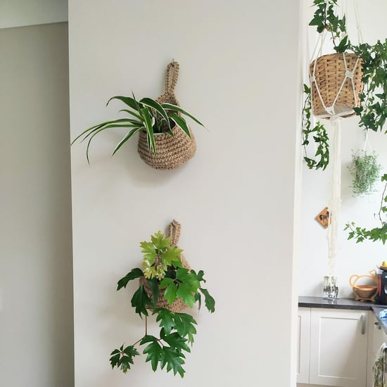 Best Hanging Planters