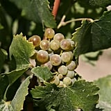 Washington State For Riesling