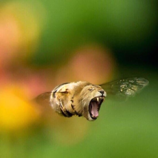 What Is the Bee Lion Meme?