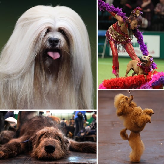 2012 Crufts Dog Show Photos