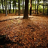 Autumn leaves covered the forest floor in the Cheshire countryside of Knutsford in the UK.