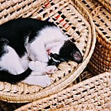 Just a little cat nap on a basket.