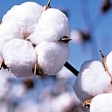 H&M is the biggest user of organic cotton in the world.