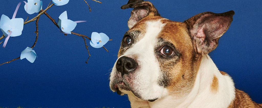 Senior Superlatives Project For Older Dogs Up For Adoption