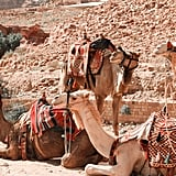 Consider Ethics Before Riding a Camel
