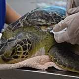 You can check out turtles in rehab