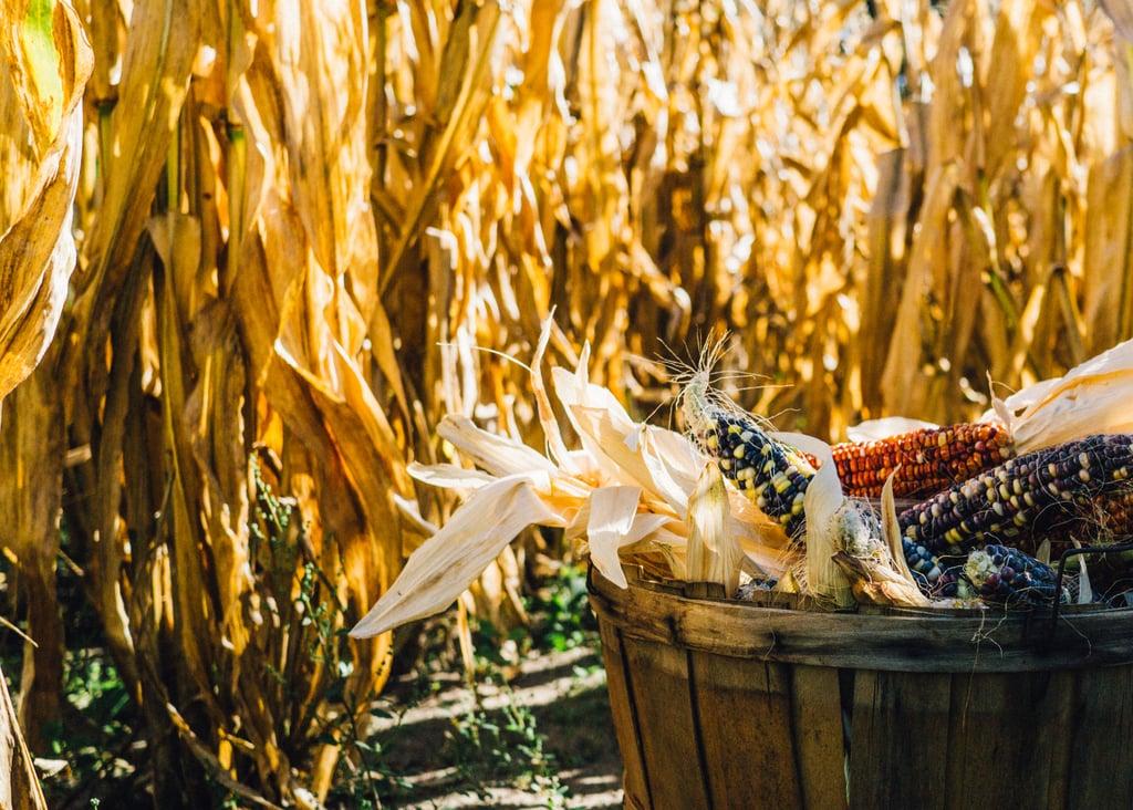 Go through a corn maze.