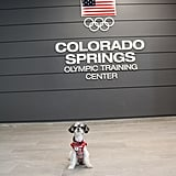 And to the Olympic Training Center! I am official Team USA pup!