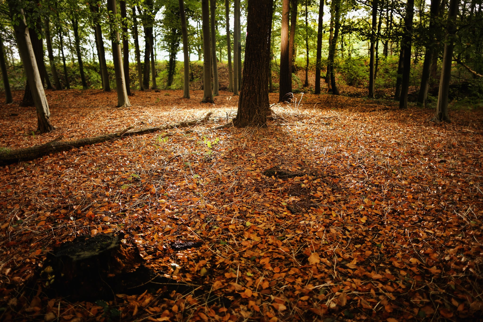 Autumn Leaves Covered The Forest Floor In The Cheshire Countryside