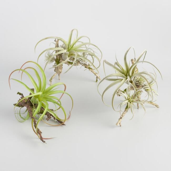 Faux Air Plants on Twigs