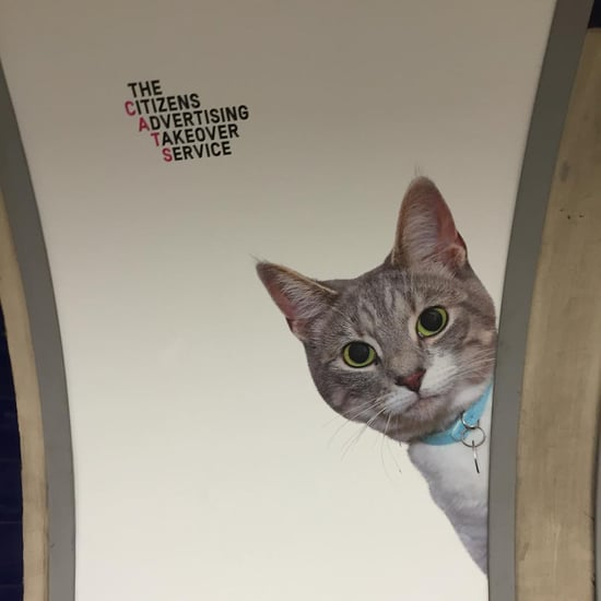Cat Advertisements in London Underground