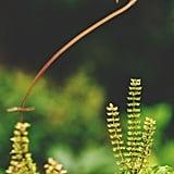 Plant Mint