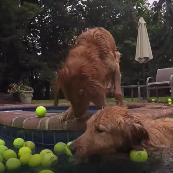 Videos of Dogs Swimming