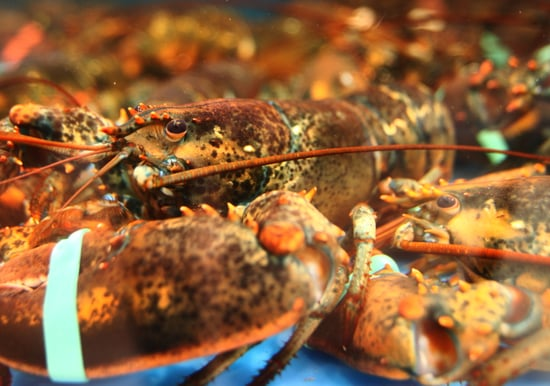 Yummy Links: From Lobster to Burgers