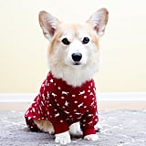 You Get to Dress Your Pets in Cute Little Sweaters and Jackets