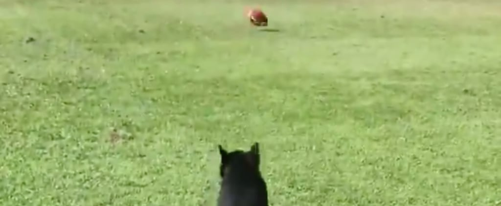 Video of a Dog With Paralyzed Back Legs Chasing His Ball